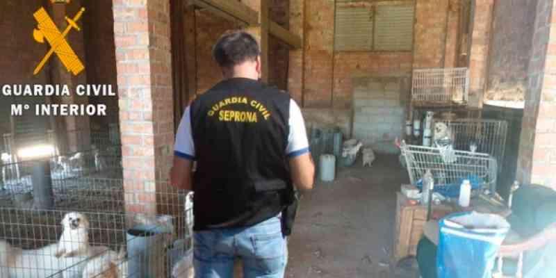 Criador ilegal de cães cortava cordas vocais dos animais para não fazerem barulho