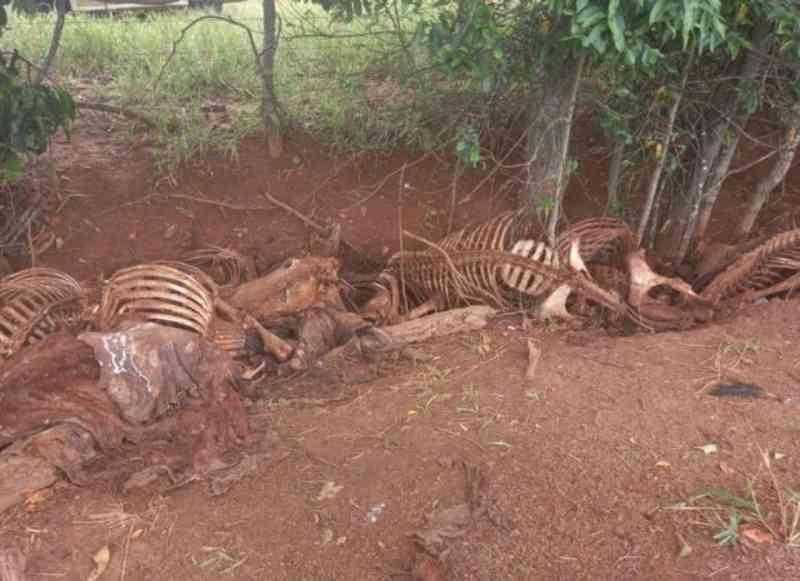 Polícia encontra cerca de 100 carcaças de cavalos em fazenda de Aparecida de Goiânia, GO