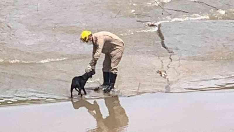 Bombeiros resgatam cachorro no leito do Córrego Cascavel, em Goiânia, GO