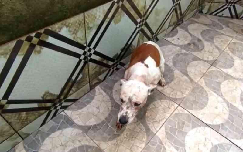Homem é preso suspeito de matar o próprio cão, agredir outro e bater em PM que tentou segurá-lo, em Goiânia, GO