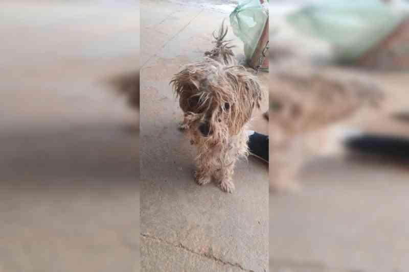 Mulher é presa por deixar cachorros amarrados no meio de fezes e urina em Novo Gama, GO