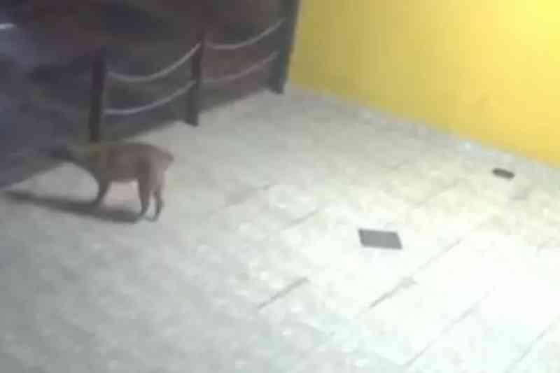 Vídeo: policiais colocam cobertor e comida para cadela de rua em Goiás
