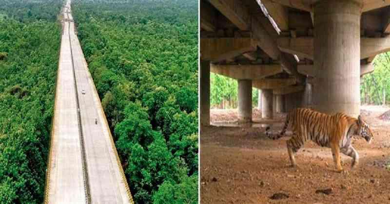 Índia constrói estradas elevadas para que os animais não sejam mais atropelados