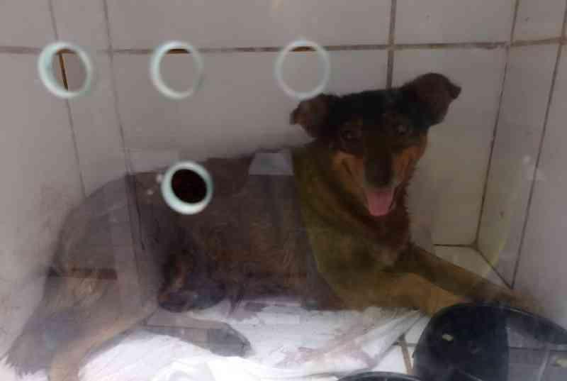 Polícia Civil vai apurar morte de cachorra por vários golpes de objeto perfurante em Além Paraíba, MG