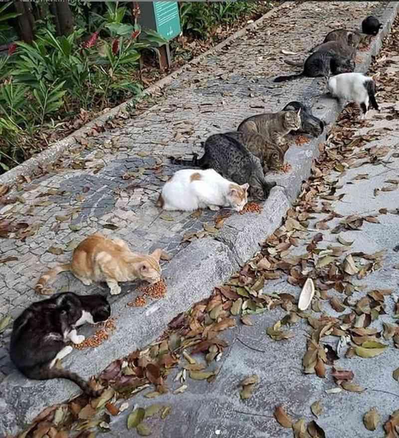 'Imploramos socorro e justiça', diz voluntária após morte de gatos no Parque Municipal de Belo Horizonte, MG