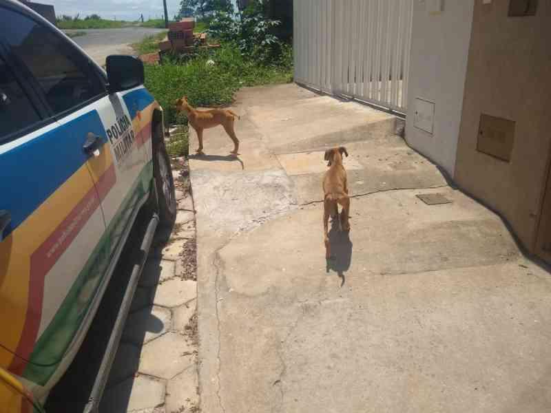 Polícia de Meio Ambiente registra situação de maus-tratos contra dois cachorros no bairro Cidade Nova, em Formiga, MG