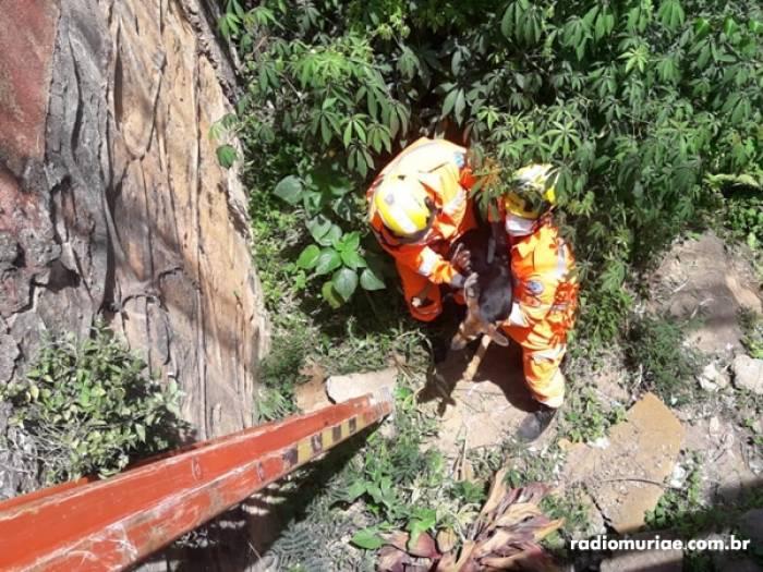 Cachorro jogado de ponte é resgatado pelo Corpo de Bombeiros em Muriaé, RJ