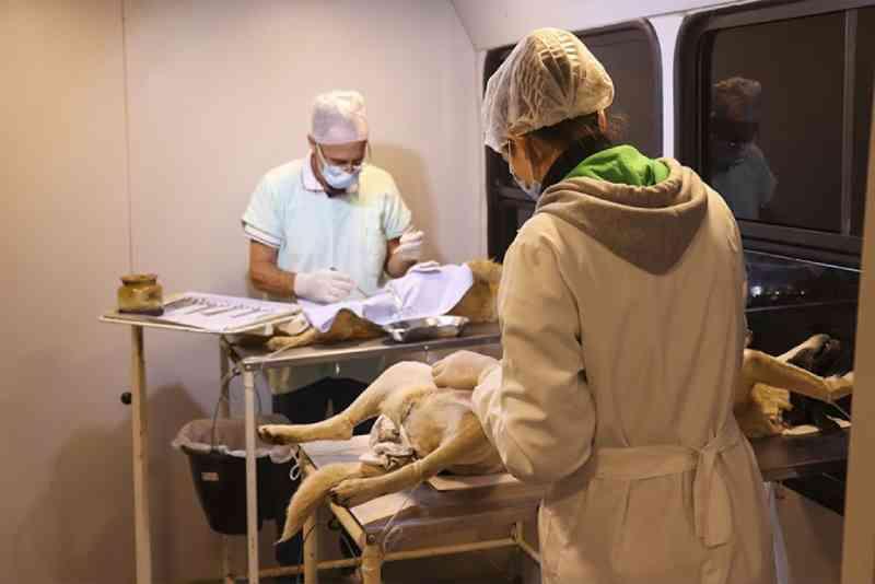 Programa Municipal de Castração em Pouso Alegre (MG) bate meta e já esterilizou mais de cinco mil animais em três anos