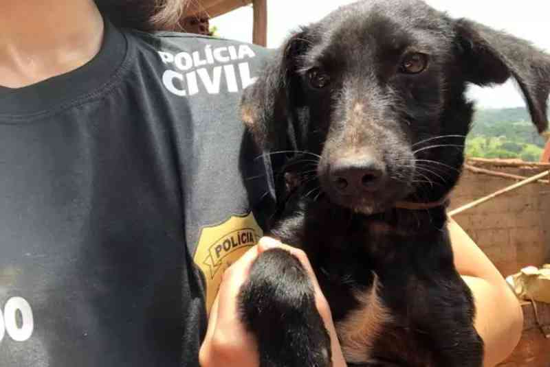 Polícia resgata 14 animais em situação de maus-tratos em São Joaquim de Bicas, MG