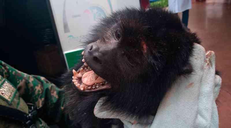 Macaco machucado é resgatado pela polícia em condomínio em Uberaba, MG; veja vídeo