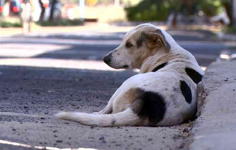 'SUS Animal' está suspenso em Uberaba, MG