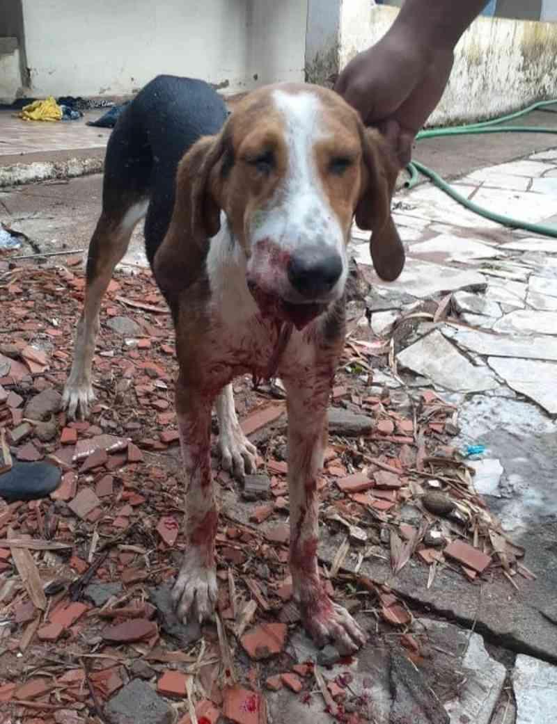 Cão é agredido com pauladas em Uberlândia (MG) e vizinho é preso ao confessar o crime