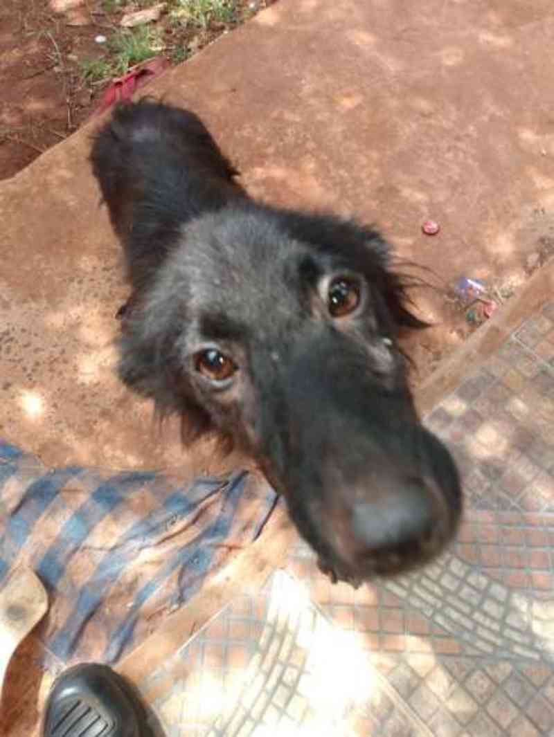 Mulher leva multa de R$ 1 mil por deixar cachorro sem comida e doente em MS