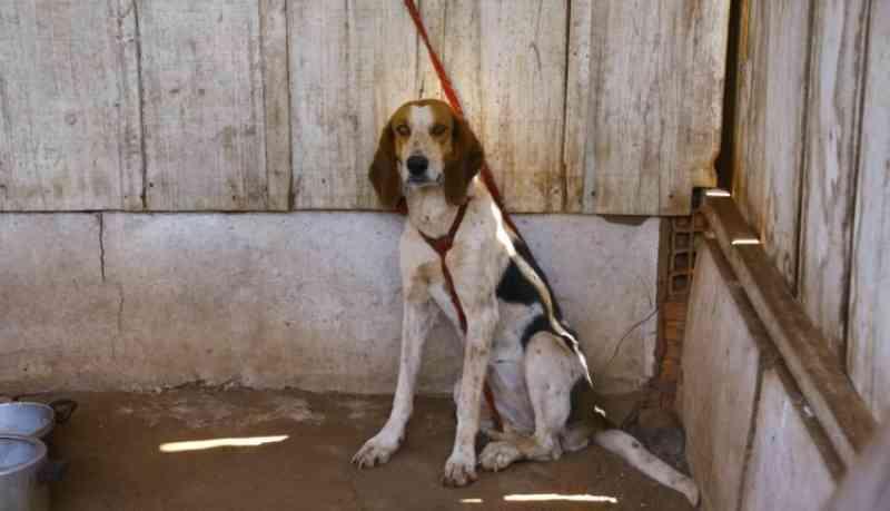 Voluntários podem oferecer lar temporário para animais resgatados de maus-tratos pela polícia, em Campo Grande, MS