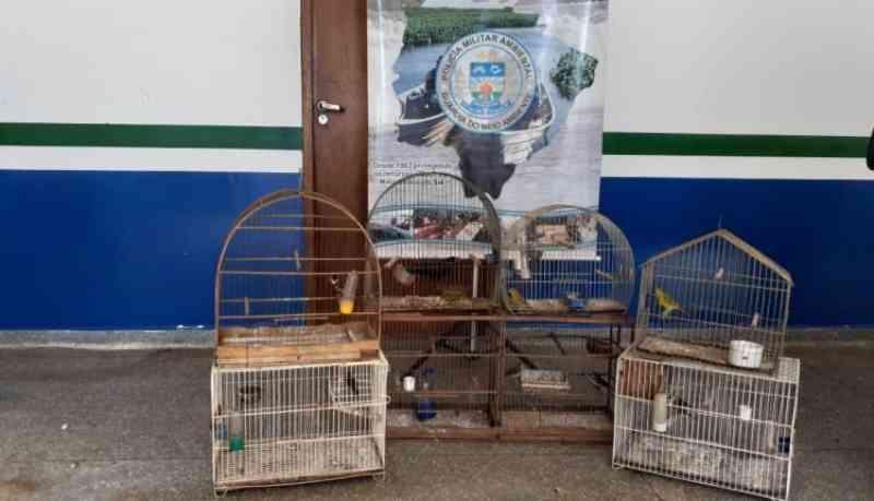 PMA de Naviraí (MS) autua homem em R$ 4,5 mil por criação ilegal de pássaros em cativeiro