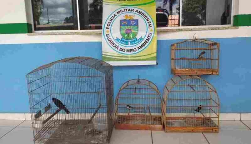 Morador é preso e multado por capturar e manter pássaros silvestres em cativeiro, em Três Lagoas, MS