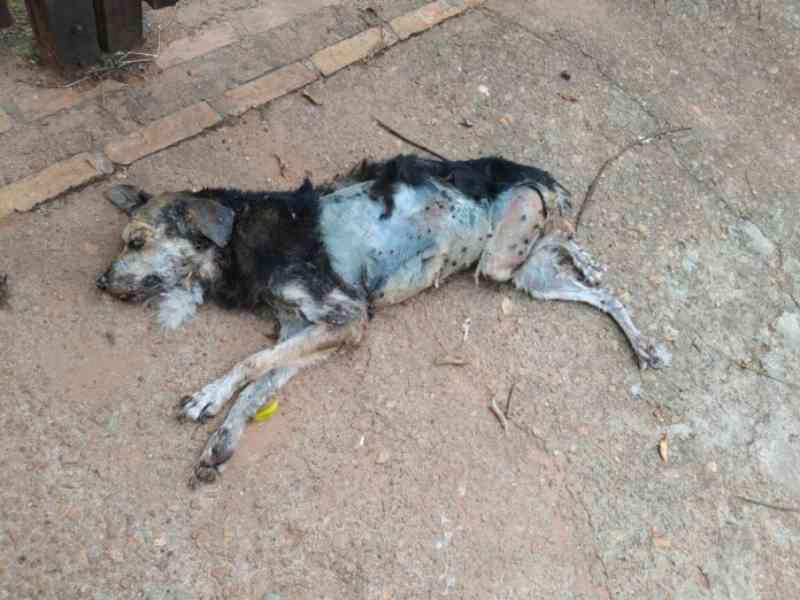 Homem viaja e deixa cachorro morrer em residência, em Aquidauana, MS