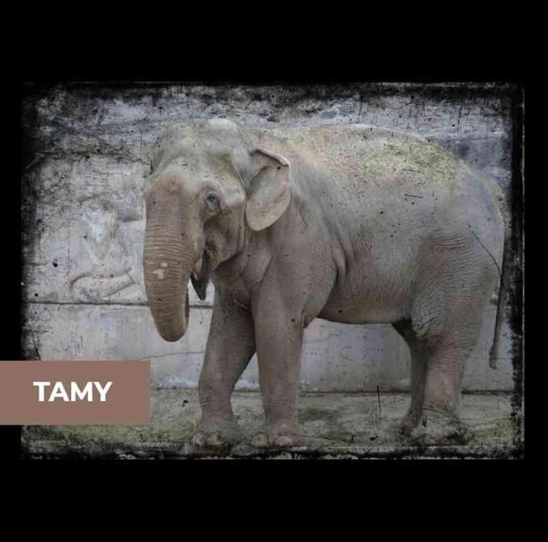 Santuário faz campanha para construir espaço para abrigar o 1º elefante macho em Chapada dos Guimarães, MT