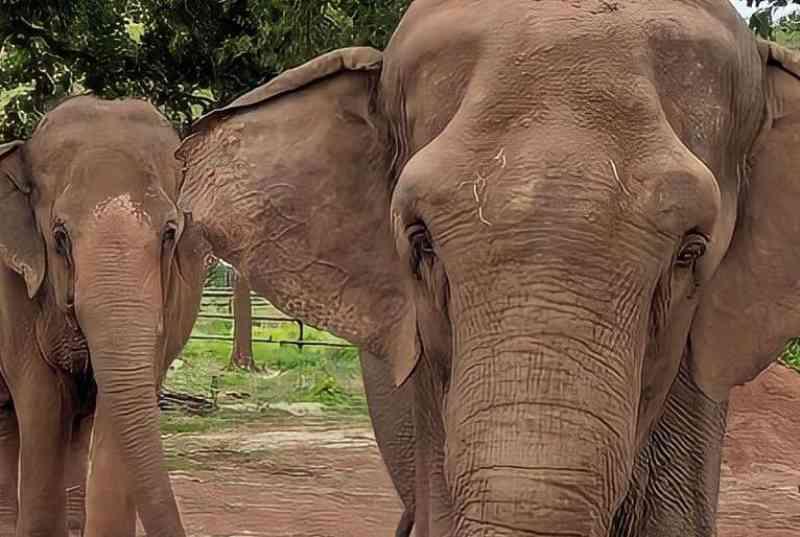 Na Chapada dos Guimarães, Santuário de Elefantes Brasil recebe mãe e filha para a manada