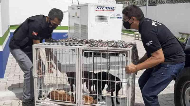 Em meio a fezes e sem comida e água, cães são resgatados com sinais de maus-tratos em Belém, PA