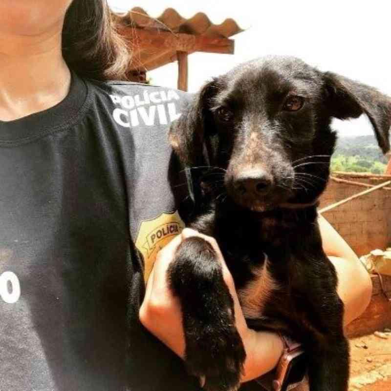 PCMG resgatou 14 animais vítimas de maus-tratos em São Joaquim de Bicas, MG