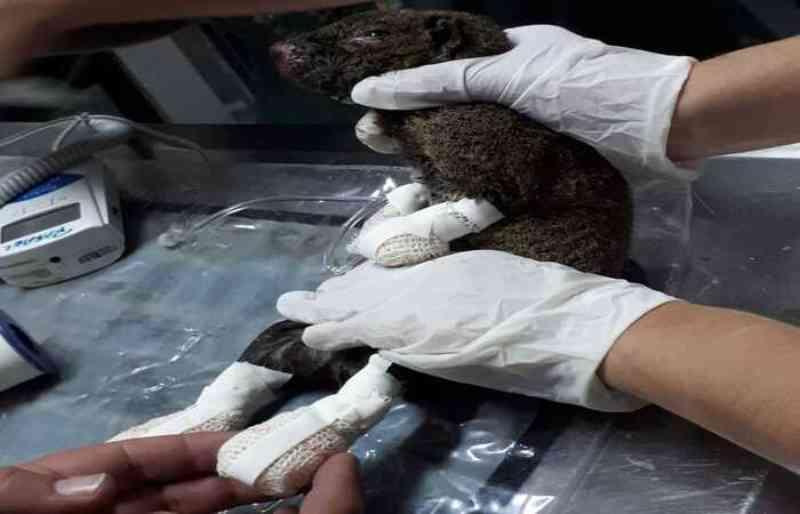 Filhotes de animais silvestres são resgatados em Pernambuco