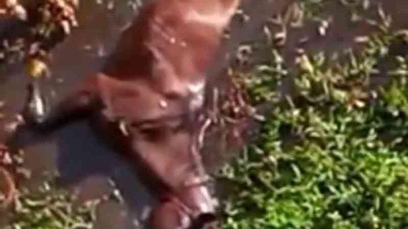 Homem joga cavalo da ponte durante romaria