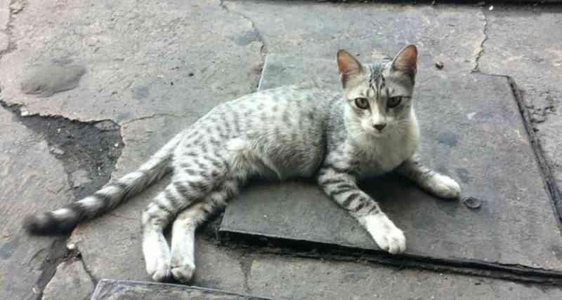 Advogado ameaça matar gatos com chumbinho em condomínio de Teresina, PI