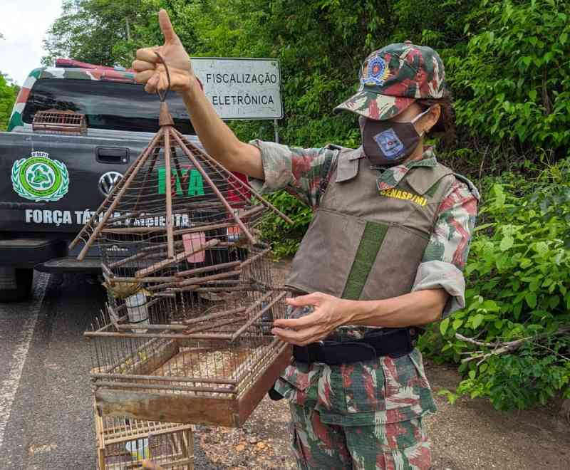 Polícia Ambiental resgata corujas, papagaio e outros pássaros silvestres na zona rural de Teresina, PI