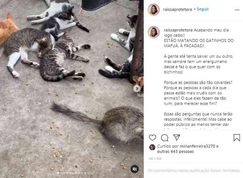 Protetora denuncia assassinato de gatos na Praça do Mafuá em Teresina, PI