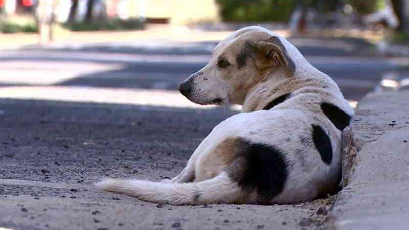 Universitários criam projeto de castração solidária de cães e gatos de rua em Teresina, PI