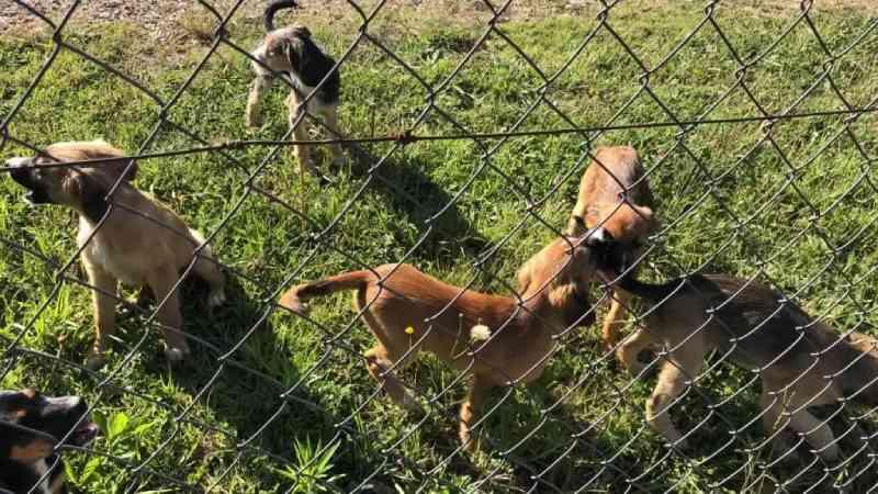 Abandono de cães na área rural já virou uma 'epidemia' em Araucária, PR