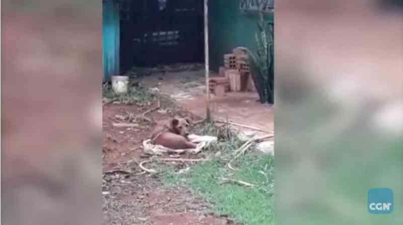 Internauta denuncia abandono e maus-tratos de animais no Jardim Presidente, em Cascavel, PR