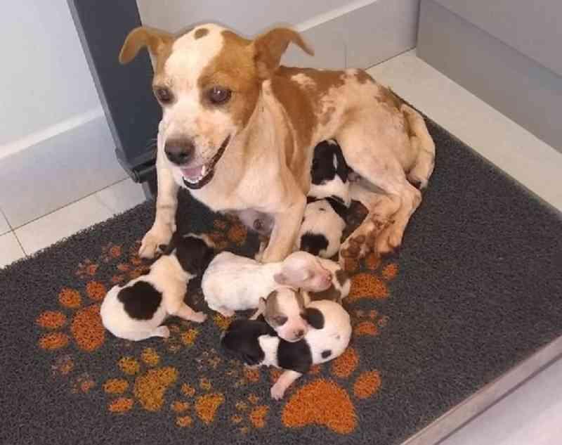 Guarda que auxiliou no resgate de cachorra e filhotes percorreu quilômetros em busca de água e comida