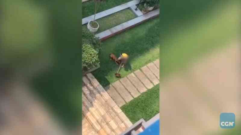 Homem que foi flagrado enforcando cachorro não poderá mais ter animais de estimação