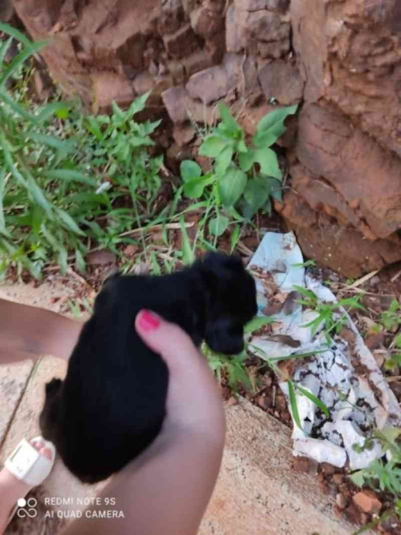 Cachorros são abandonados e filhotes morrem no Anel Viário de Marechal Rondon, PR