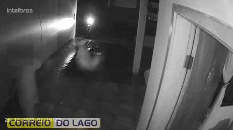 Vídeo: Câmera registra homem arremessando cachorro em Maringá, PR