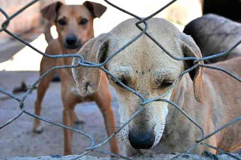 Ortigueira (PR) registra uma denúncia por semana de maus-tratos a animais