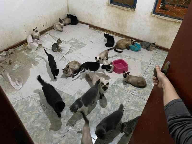 Grupos alertam sobre falsas doações para resgate de gatos em Ponta Grossa, PR