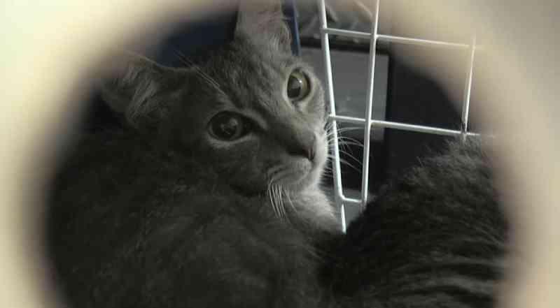 Polícia resgata mais de 160 gatos, e casal é preso suspeito de maus-tratos, em Ponta Grossa, PR
