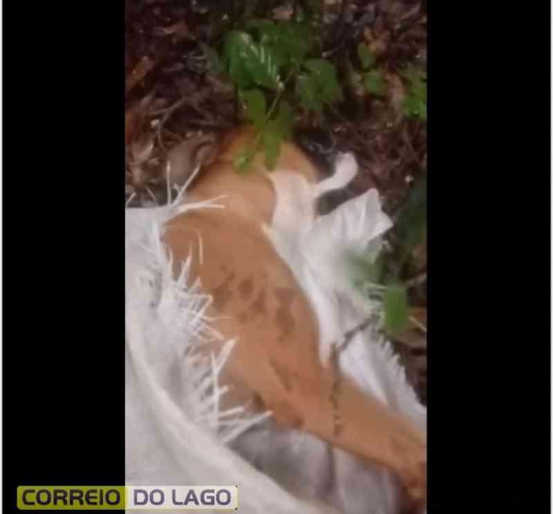 Cachorro é abandonado, preso dentro de saco, em meio a mata em Santa Helena, PR
