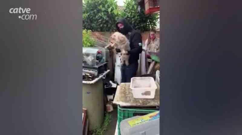 Polícia resgata animais em condições de maus-tratos em Pinhais (PR) e tutor não é encontrado