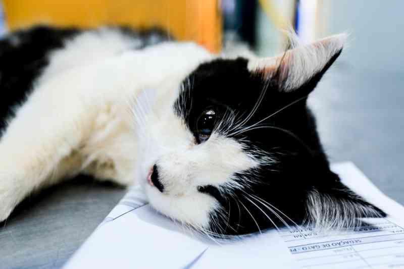 Programa castrou gratuitamente quase 11 mil cães e gatos no Paraná