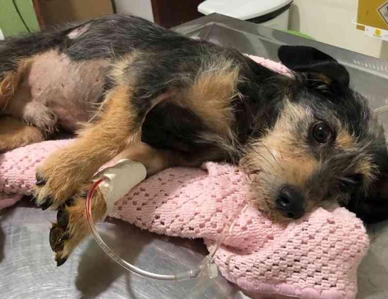 Suspeito de matar cachorros com espingarda de pressão é levado à delegacia em Colorado (PR), diz Polícia Civil