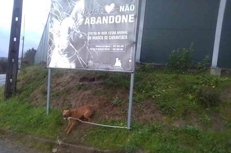 Cão é abandonado junto a cartaz que apela à adoção de animais em Portugal