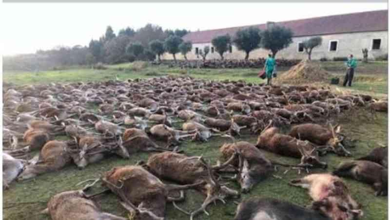 Morte de 500 animais em caçada 'esportiva' em Portugal gera revolta nas redes sociais