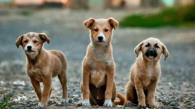 Portugal: Faro reforça verba do cheque veterinário para cuidar de animais errantes