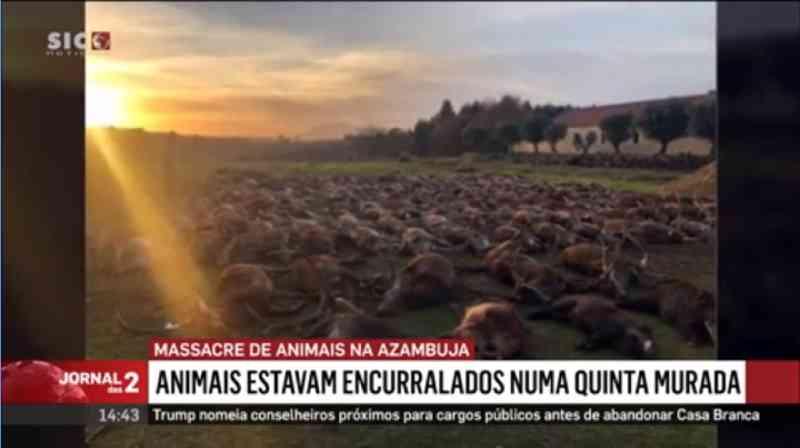 Portugal: dezesseis homens pagaram cerca de 7 mil euros cada um para abater animais na Quinta da Torre Bela