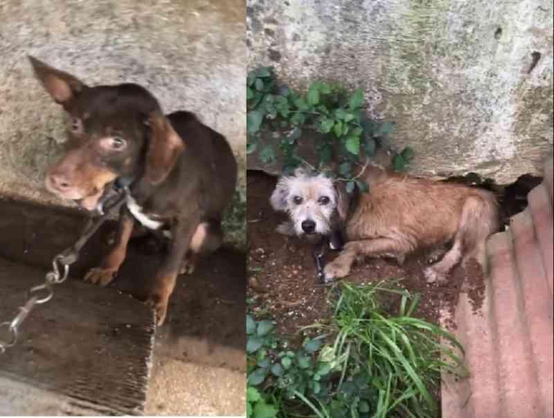 Cadelas abusadas sexualmente em Tomar, Portugal