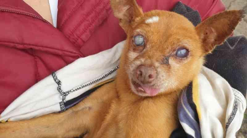 Portugal: cão cego encontrado preso a uma porta na Boa Nova